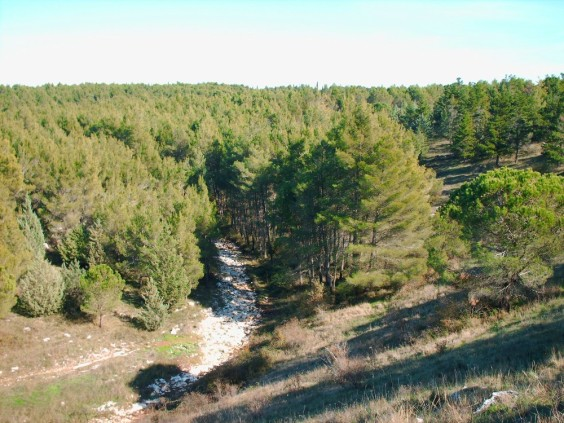 foresta mercadante places to see in puglia