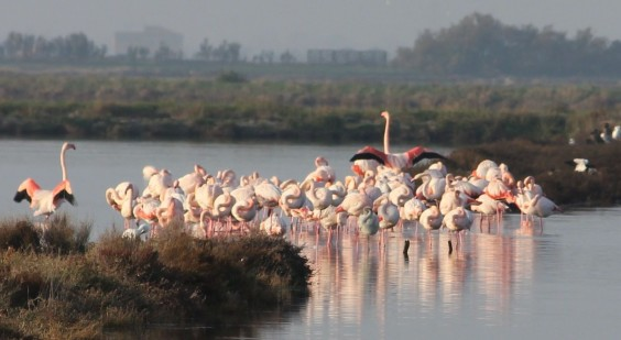 places to see in puglia the saline with flamingoes